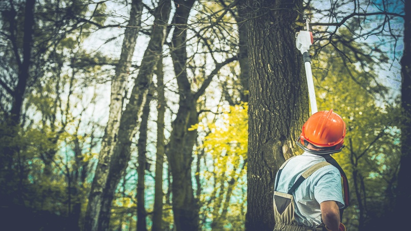 Rely On Professional Tree Trimming to Keep Your Aurora Home Beautiful